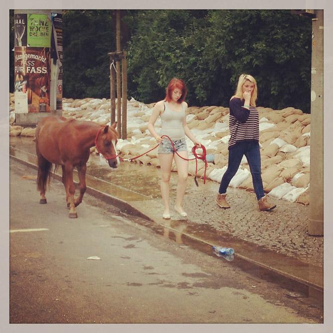 Spaziergang mit Pony auf der Leipziger Straße nahe Puschkinplatz - 06.06.2013
