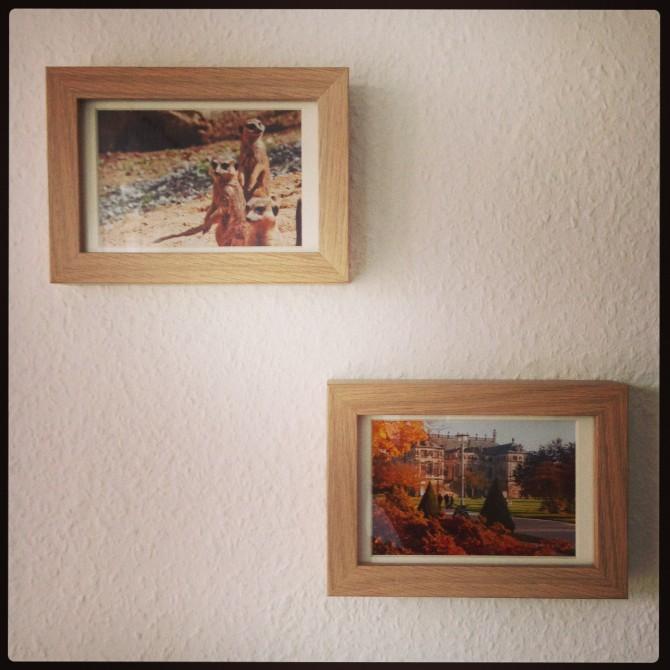 Erdmännchen und Dresden im Herbst